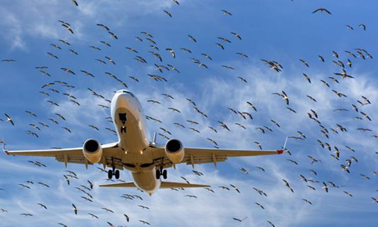 Airport Bird Strike Management